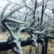 Frozen Deer Scent   Frozen Deer Scents