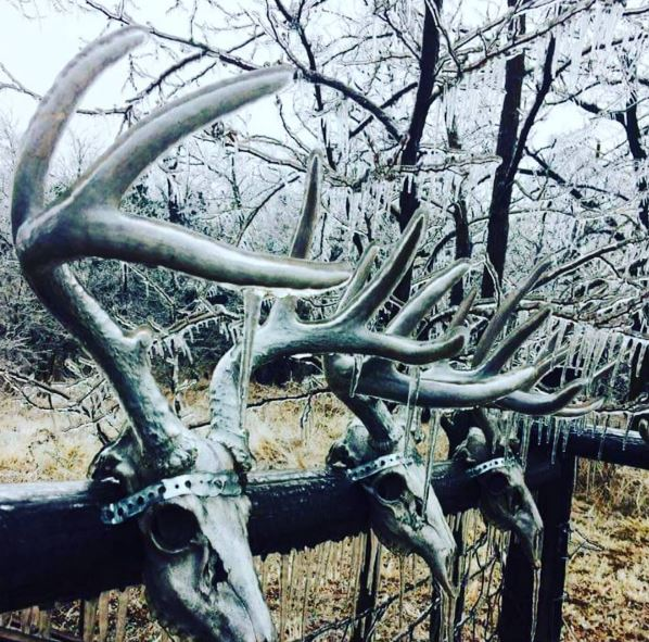 Frozen Deer Scent | Frozen Deer Scents