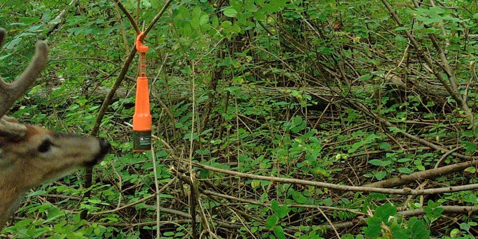 Hunting Phases during Deer Season l Heated Hunts